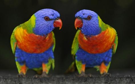 Mooie-papegaaien-achtergronden-hd-papegaaien-wallpapers-16